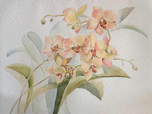 Анна Чепель. Ветка орхидеи, 2016. Цветущая орхидея персиково-розового оттенка на фоне листьев.
