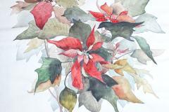 Рождественская звезда - Пуансеттия 25x35 см., бумага,акварель, тушь, 1999.<br />Без рамы