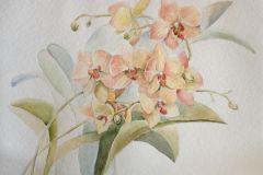 Ветка орхидеи 36x48 см., бумага,акварель, 2016. Без рамы.